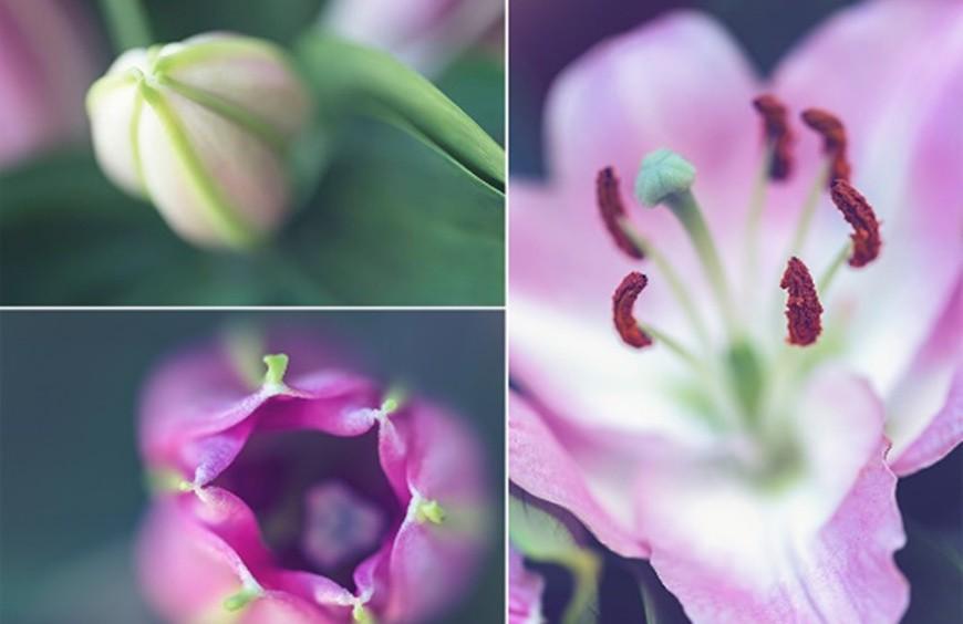 Quelles sont les fleurs du mois de mai ?