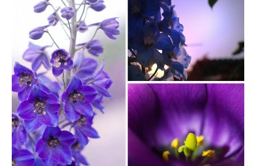 Quelle est la fleur du mois de juillet ?